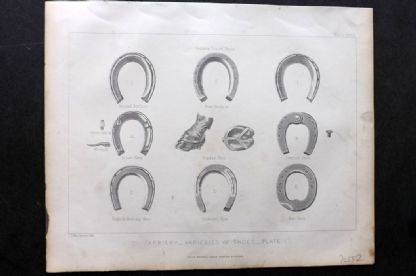 Miles C1875 Antique Print. Farriery - Varieties of Shoes